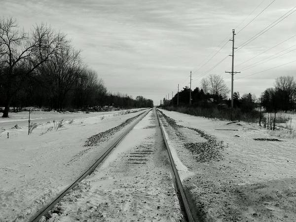Photograph - Black Tracked by Wild Thing