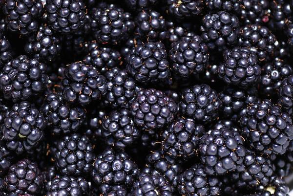 Photograph - Blackberries by Loree Johnson