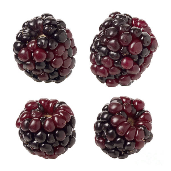 Wall Art - Digital Art - Blackberries  On White by Danny Smythe