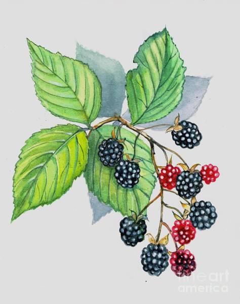 Painting - Blackberries by Val Stokes
