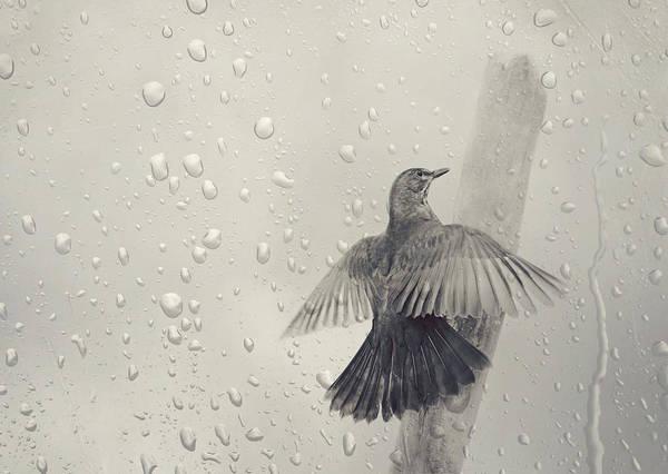 Wallpaper Mixed Media - Blackbird In The Rain by Heike Hultsch