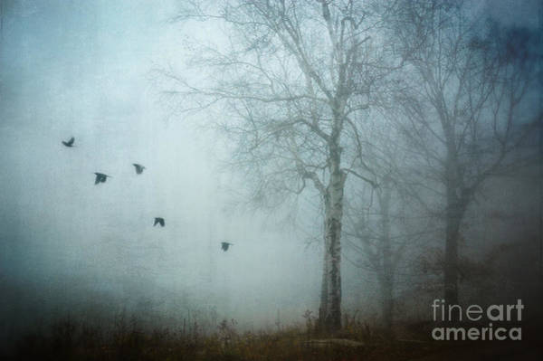 Wall Art - Photograph - Blackbirds In Fog by HD Connelly