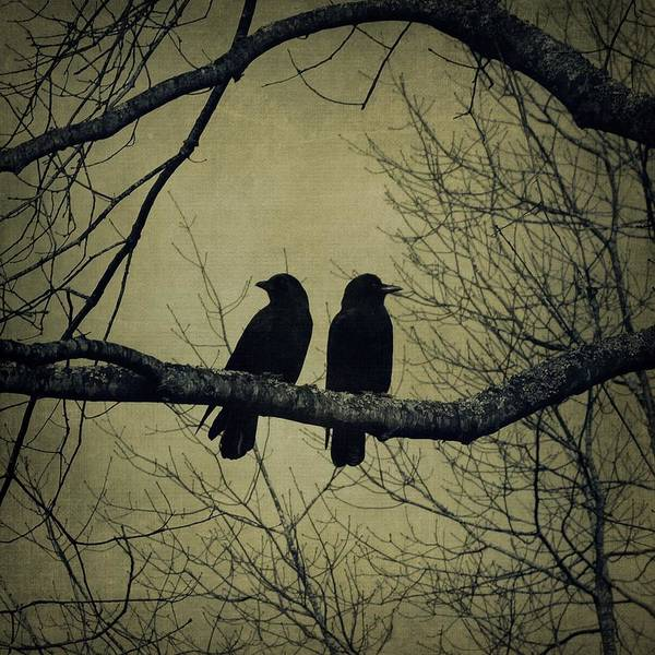 Photograph - Blackbirds On A Branch by Patricia Strand