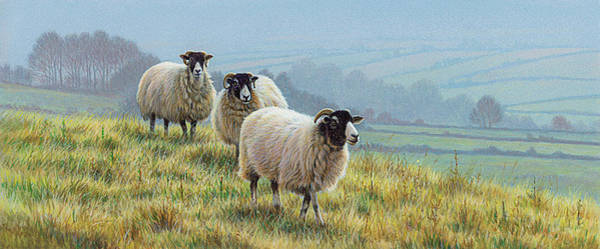 Remote Digital Art - Blackface Sheep In Countryside by Andrew Hutchinson