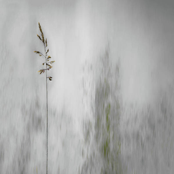 Minimalistic Photograph - Blade Of Grass by Gilbert Claes