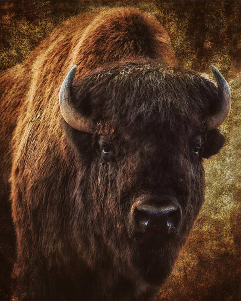 Bison Photograph - Bless The Beast by Ron  McGinnis