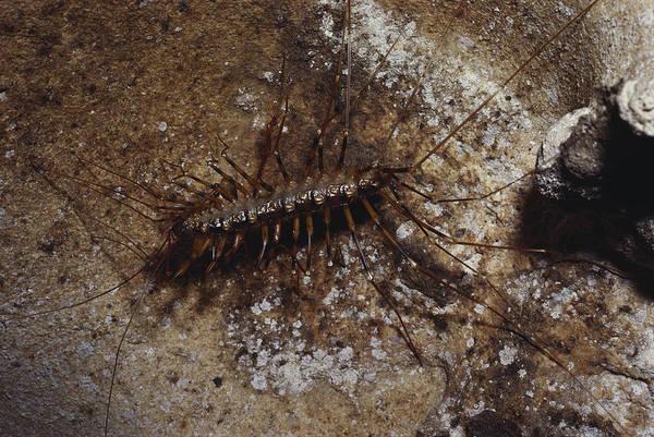 Wall Art - Photograph - Blind Centipede by Soames Summerhays