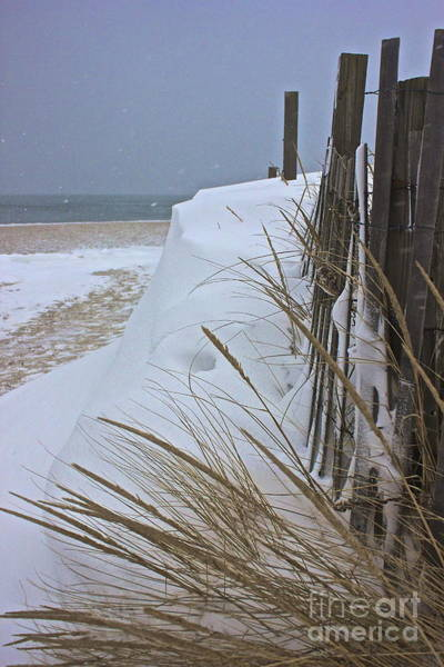Photograph - Blizzard by Amazing Jules