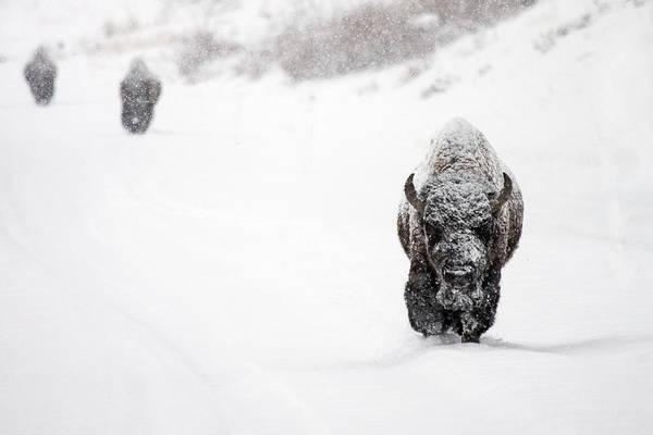 Wall Art - Photograph - The Boys Of Winter by Sandy Sisti