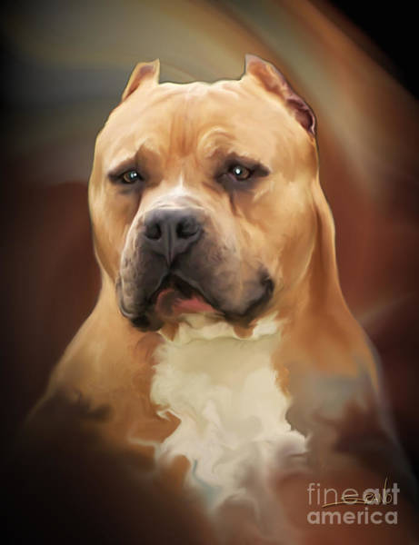 Painting - Blond Pit Bull By Spano by Michael Spano