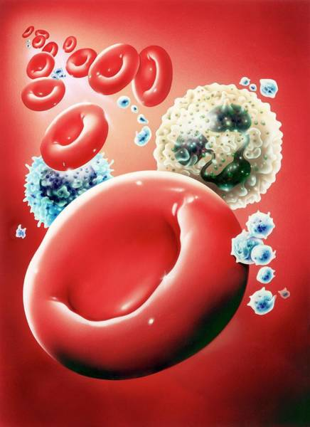Immune Cell Wall Art - Photograph - Blood Cells by John Bavosi