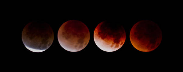 Loftus Photograph - Blood Moon by Joel Loftus