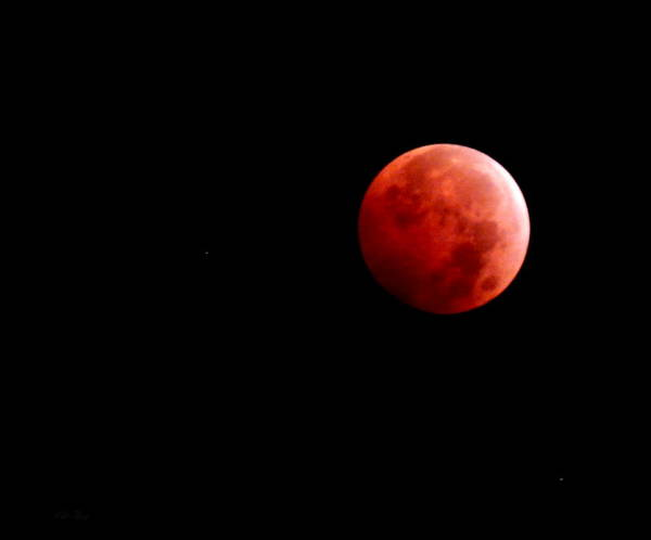 Photograph - October Bloodmoon by Wild Thing