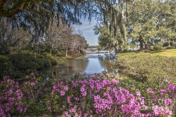 Photograph - Blooming Azaleias At Middleton Place Plantation by Dale Powell