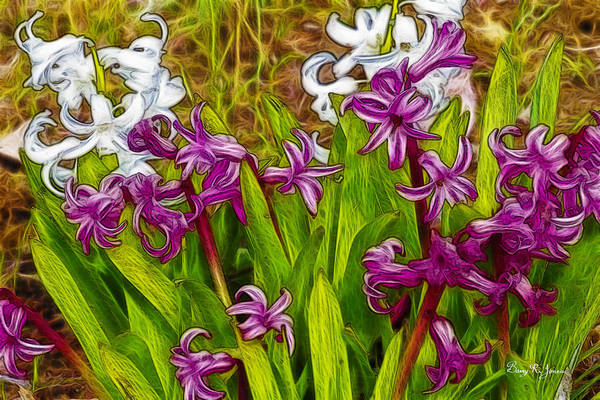 Photograph - Blooming Hyacinth by Barry Jones