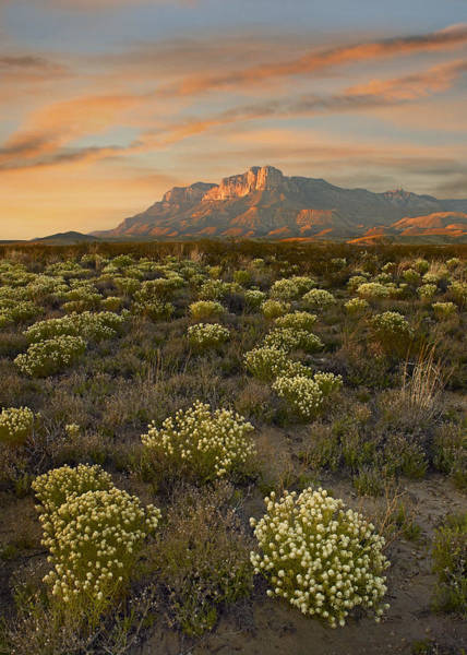 Photograph - Blooming Pepperweed And El Capitan by Tim Fitzharris