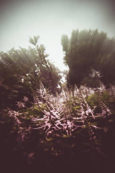 Blooming Rays  Art Print