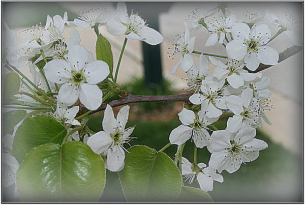 Photograph - Blooming Spring by Kay Novy