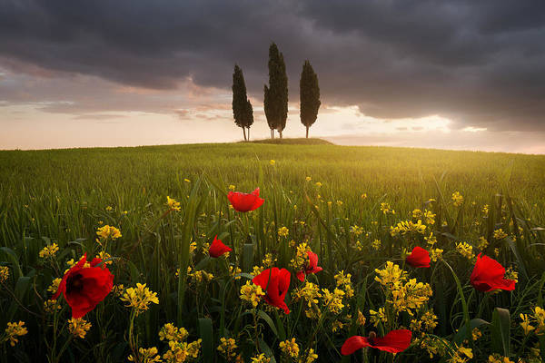 Wall Art - Photograph - Blooming Tuscany by Daniel ?e?icha