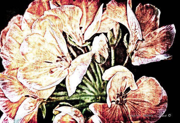 Mixed Media - Blooms by Charles Muhle