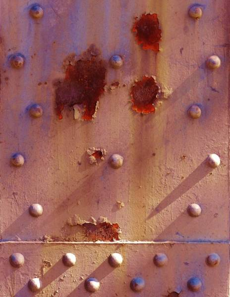 Photograph - Blooms Of Rust And Shadow by Charles Lucas