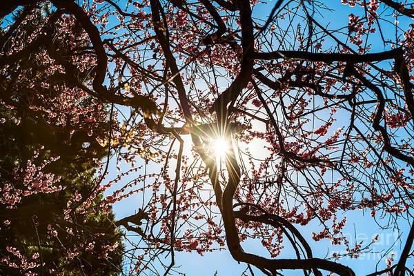 Wall Art - Photograph - Blossom Burst by Jamie Pham