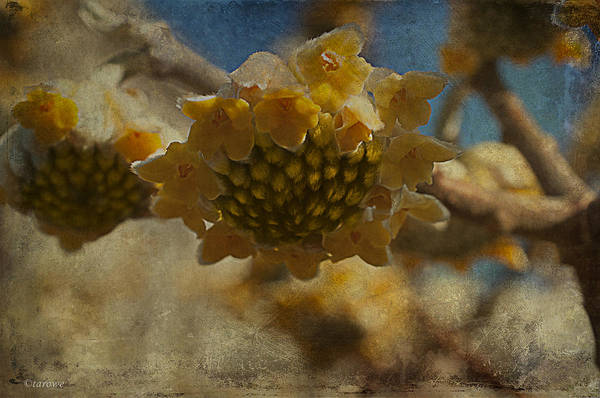 Wall Art - Photograph - Blossom Like The Sun by Terry Rowe