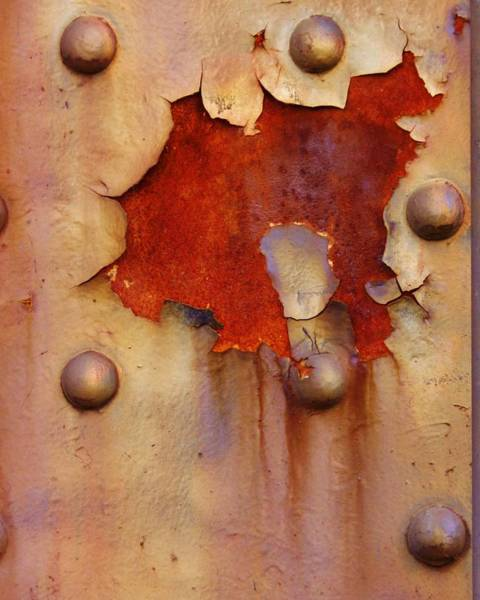 Photograph - Blossom Of Rust by Charles Lucas