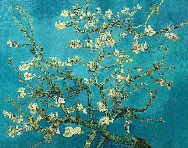 Blossoming Almond Tree Art Print