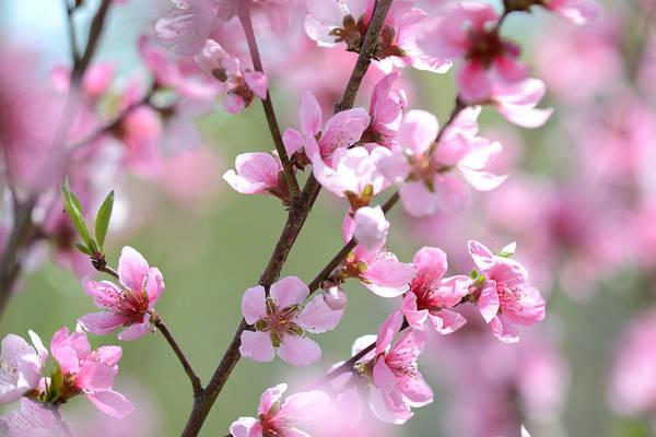 Photograph - Blossoming Hillside by Melanie Moraga