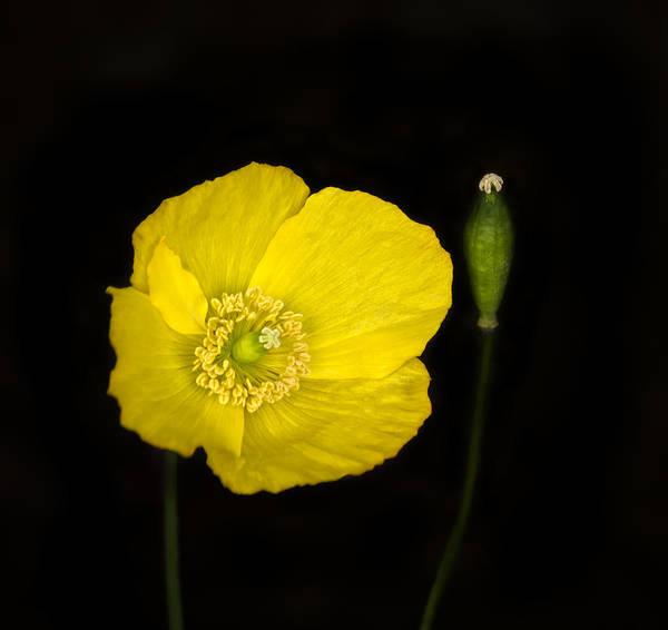 Flower Stem Photograph - Blossoming Kiss by Evelina Kremsdorf