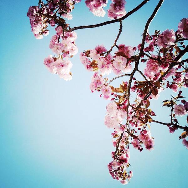 Photograph - Blossoming by Natasha Marco