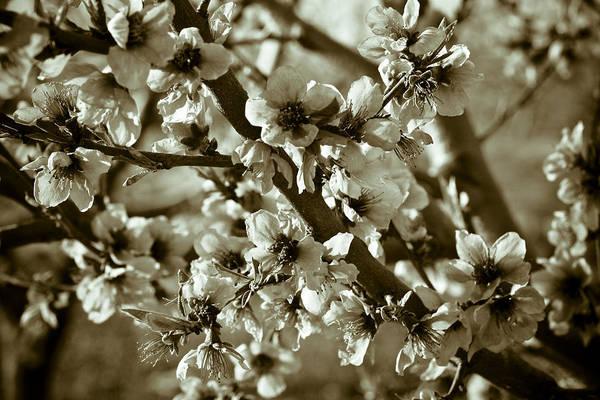 Wall Art - Photograph - Blossoms by Frank Tschakert