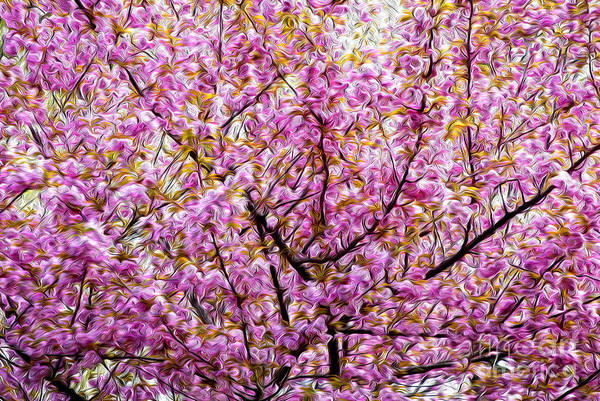 Photograph - Blossoms Galour  by Paul W Faust -  Impressions of Light