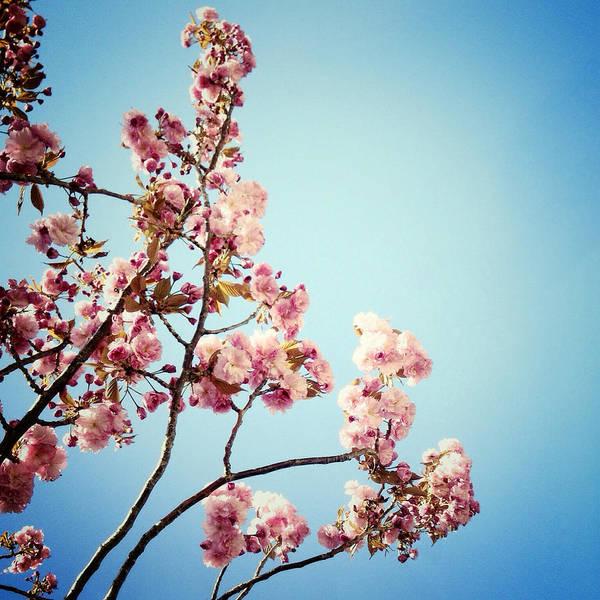 Photograph - Blossoms by Natasha Marco