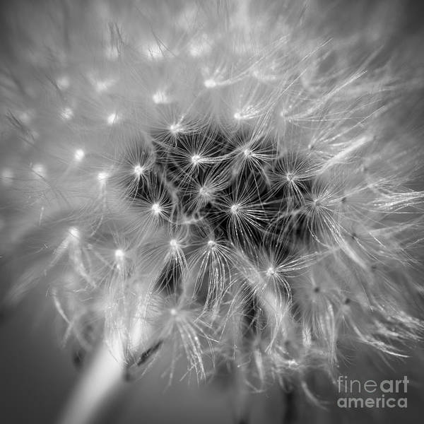 Photograph - Blowball   by Hannes Cmarits