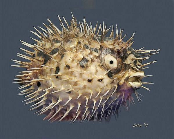 Digital Art - Blowfish by Larry Linton