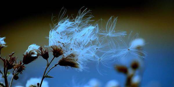 Photograph - Blowing Away by Jeremiah John McBride