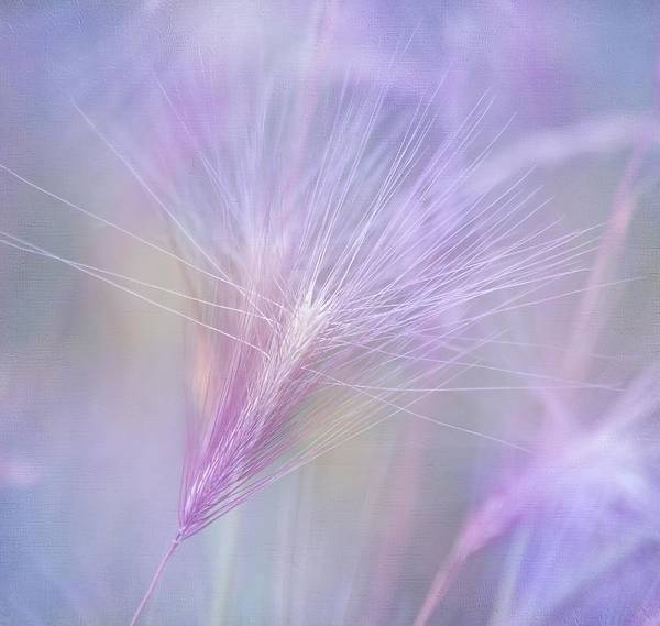 Day Dream Photograph - Blowing In The Wind by Kim Hojnacki