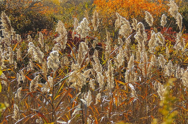 Photograph - Blowing In The Wind by Robert Mitchell