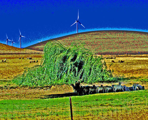 Photograph - Blu Skys Shade And Sheep by Joseph Coulombe