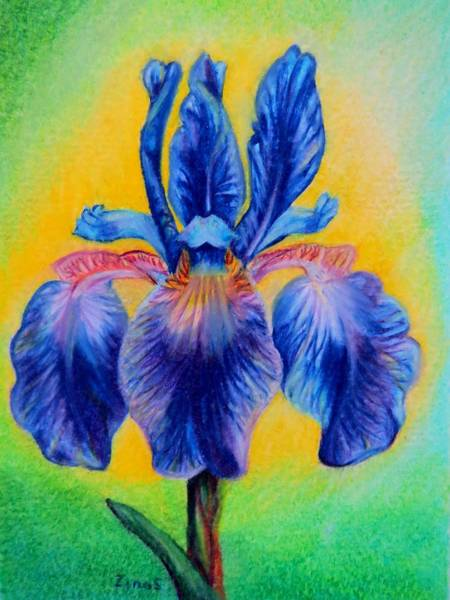 Garden Wall Drawing - Blue ... by Zina Stromberg