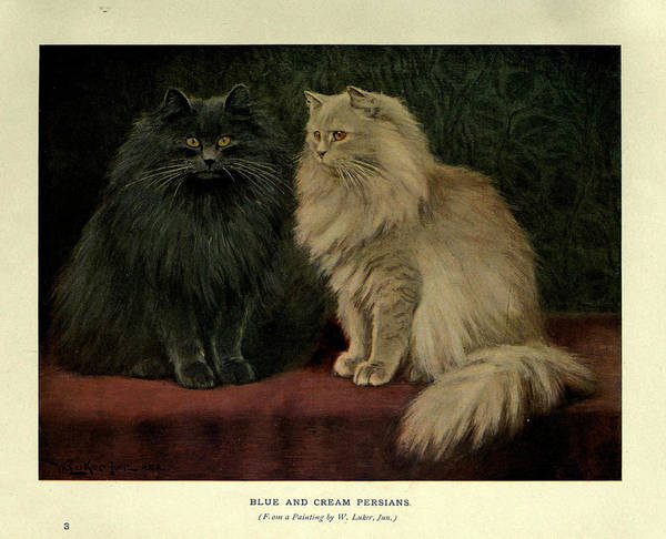 Manx Cat Wall Art - Painting - Blue And Cream Persians by Philip Ralley