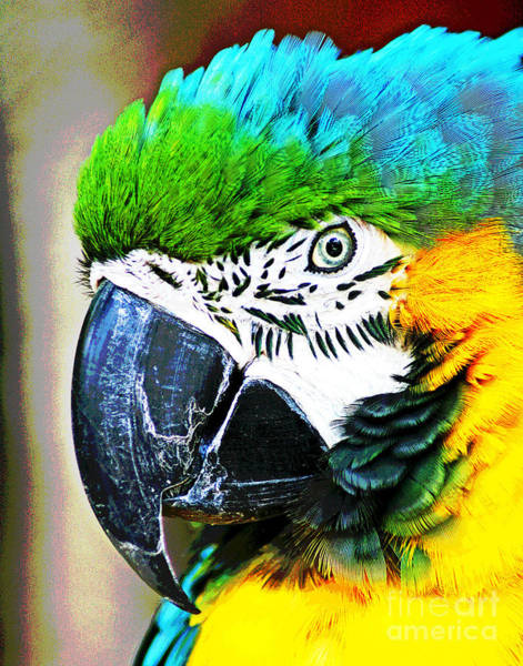 Photograph - Blue And Gold Bird Champ by Larry Oskin