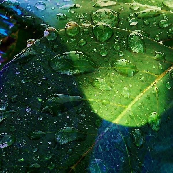 Photograph - Blue And Green - Waterdrops Series by Patricia Strand