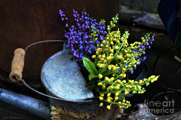 Wall Art - Photograph - Blue And Yellow Flowers by Mary Machare