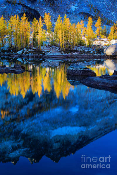Alpine Lakes Wilderness Photograph - Blue And Yellow by Inge Johnsson