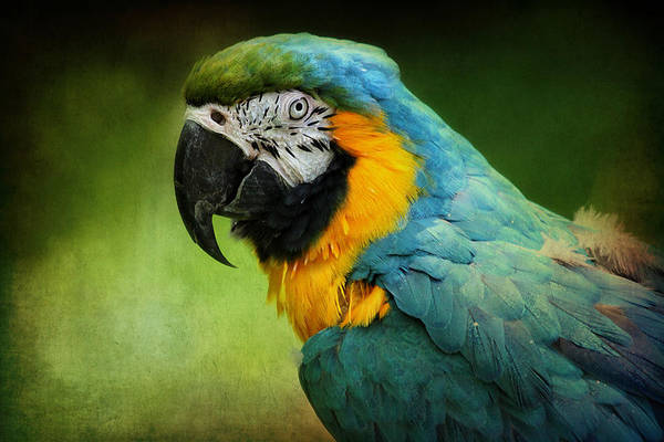 Digital Art - Blue And Yellow Macaw by Trina  Ansel