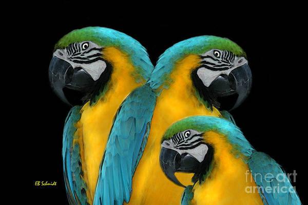 Digital Art - Blue-and-yellow Macaws by E B Schmidt