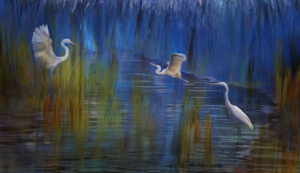 Photograph - Blue Bayou II by Melinda Hughes-Berland